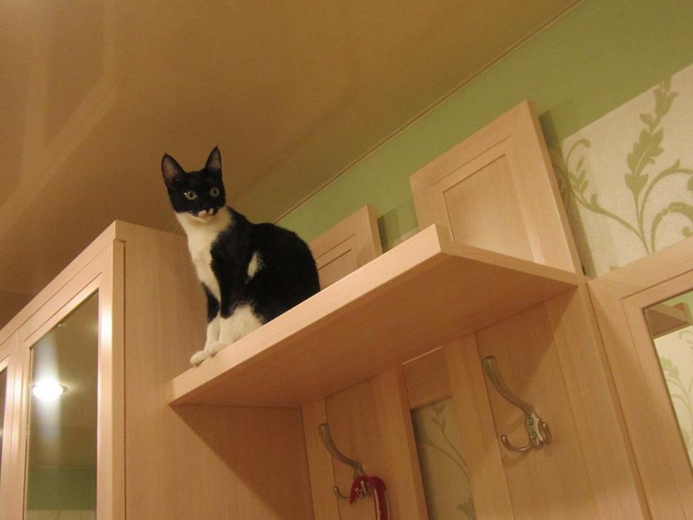 Кот и потолок