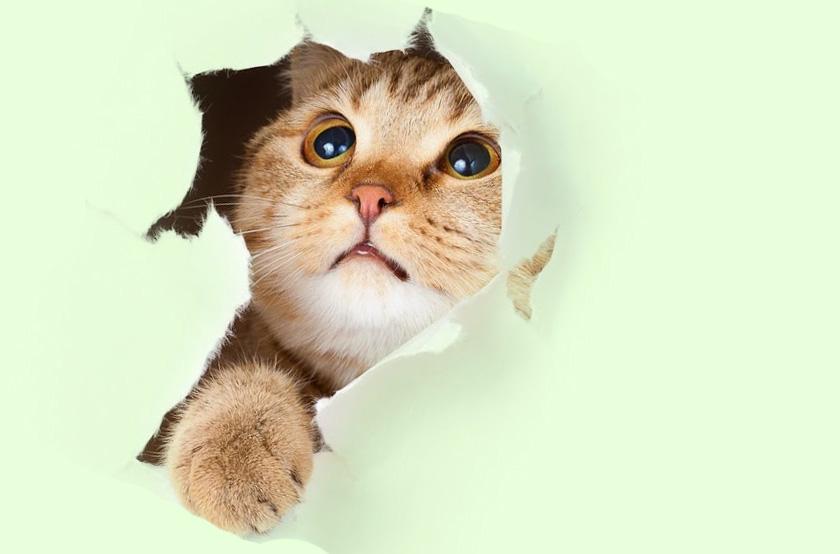 Кошка порвала натяжной потолок